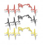 moto pulse